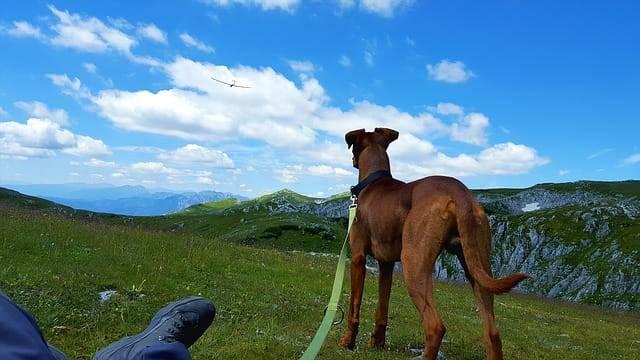 escursioni con il cane dove andare