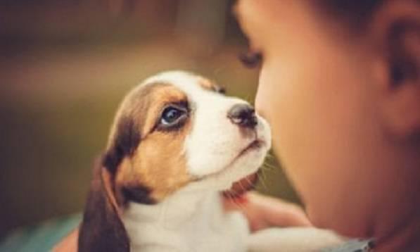 occhi dolce cani