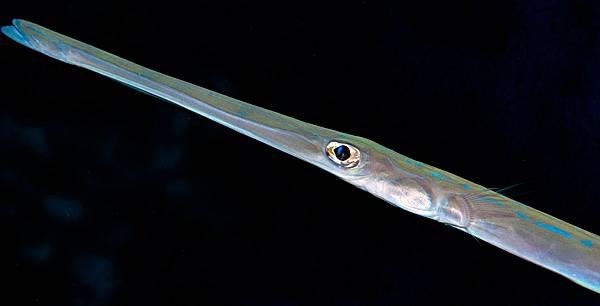 Pesci pericolosi