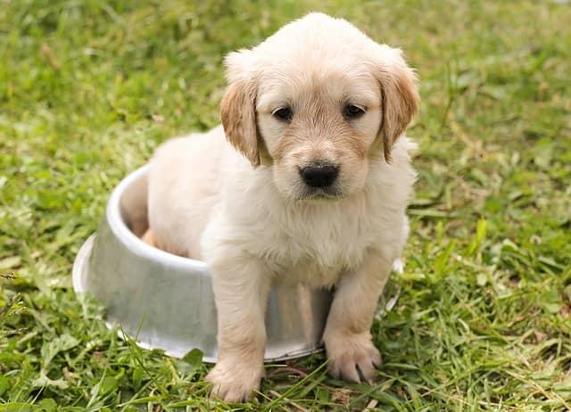 cura del cucciolo in estate