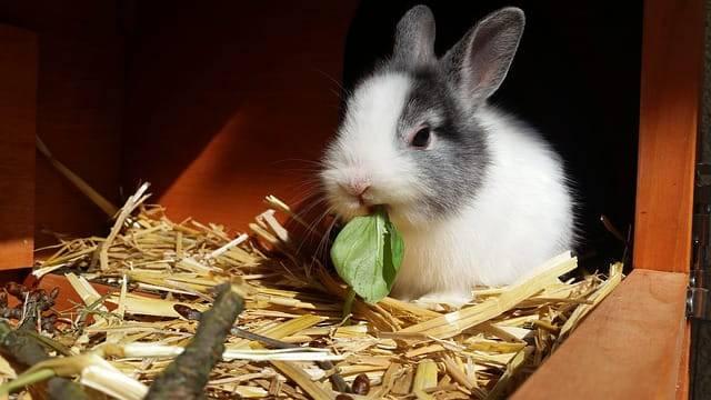 frutta e verduda coniglio nano