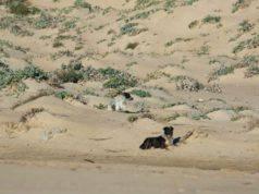 randagi spiaggia sicilia