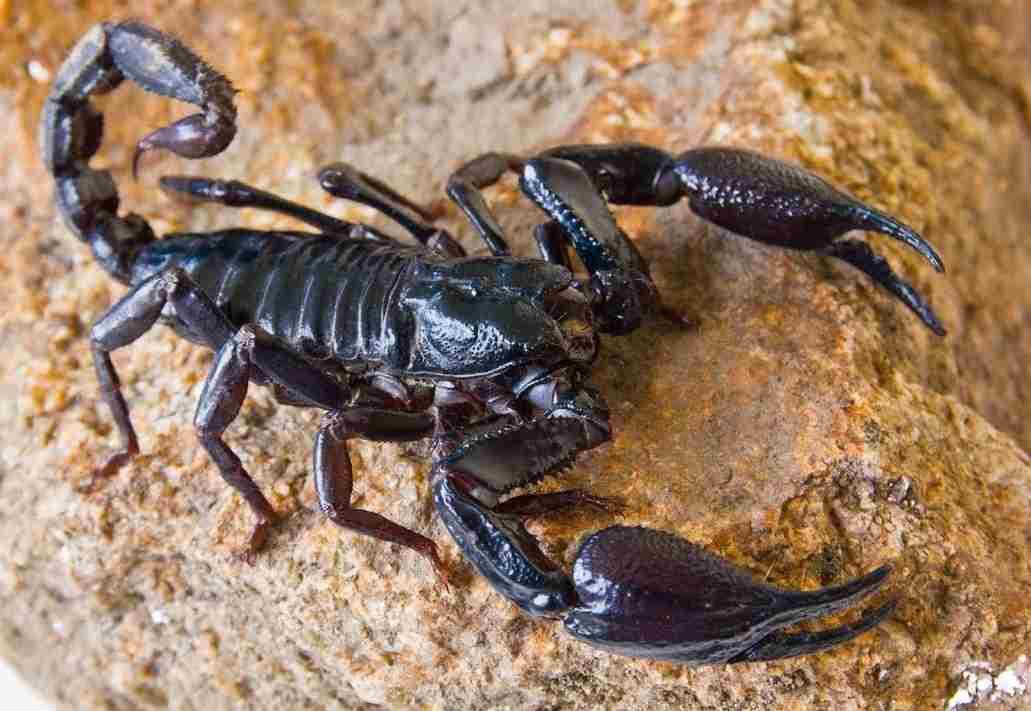 10 cose da sapere prima di uscire con uno scorpione