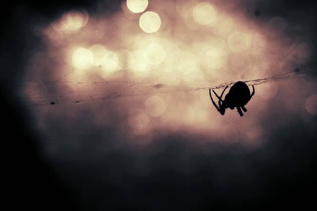 ragno sulla ragnatela