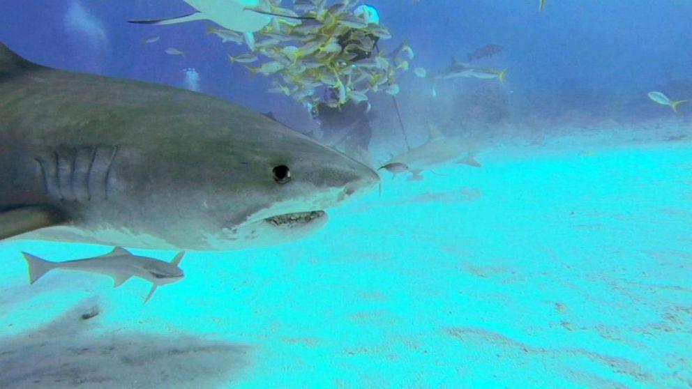 attacco squali