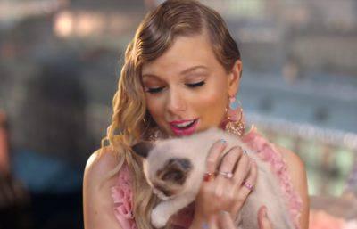 Taylor Swift gatti