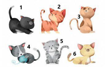 test scegli un gatto