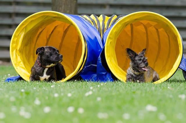 parchi giochi per cani agility