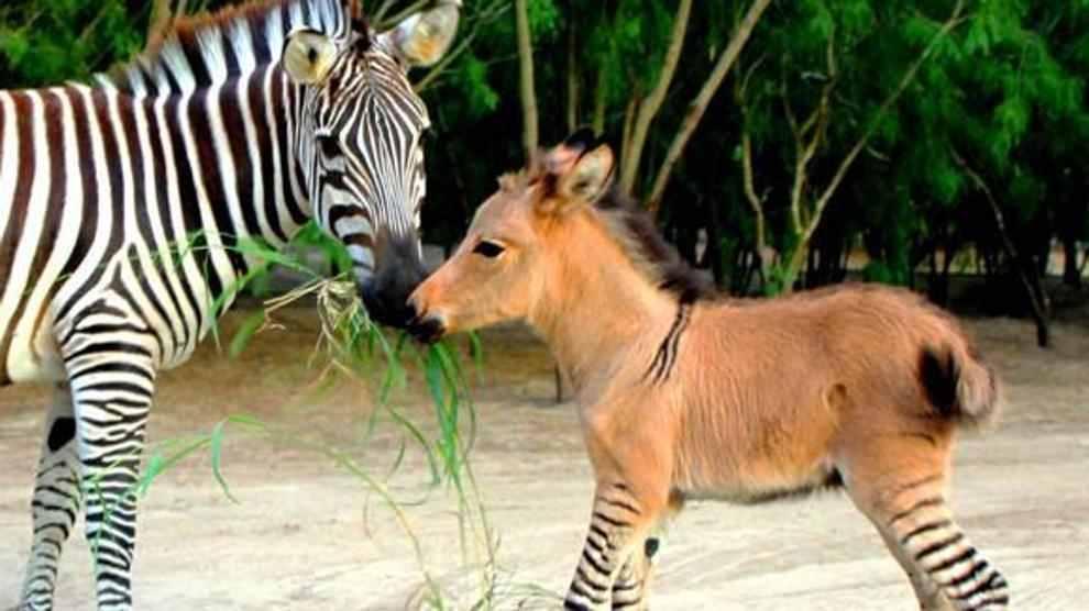 animali ibridi