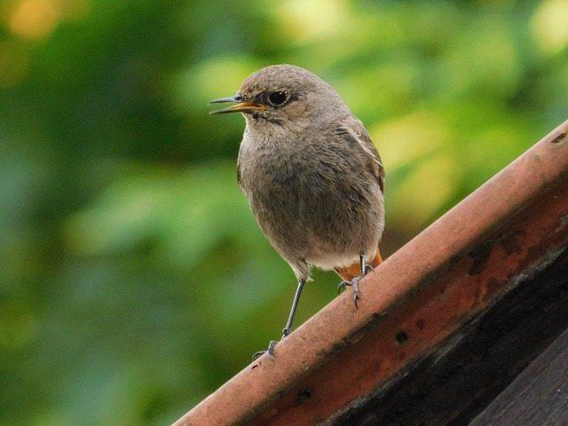 Uccellino da solo durante la vacanza