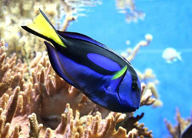Pesce da solo durante la vacanza
