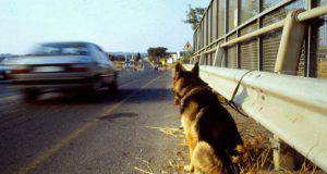 numero cani abbandonati strada