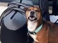 cane abbandonato in aeroporto