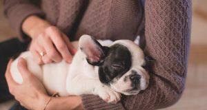 come scegliere il dog sitter