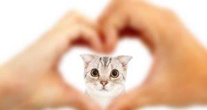 Battito accelerato nel gatto