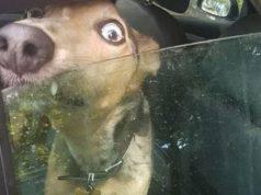 cane chiuso automobile