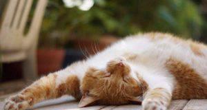 i gatti soffrono il caldo
