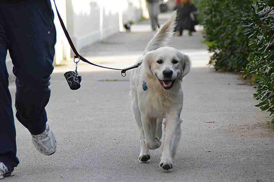 patentino per cani