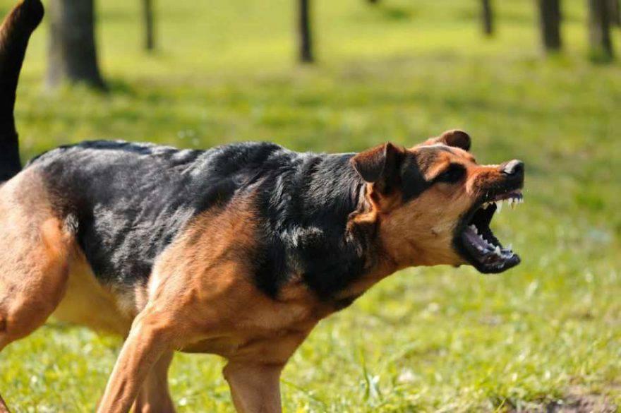cane azzanna anatra