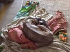 cane rogna soccorso