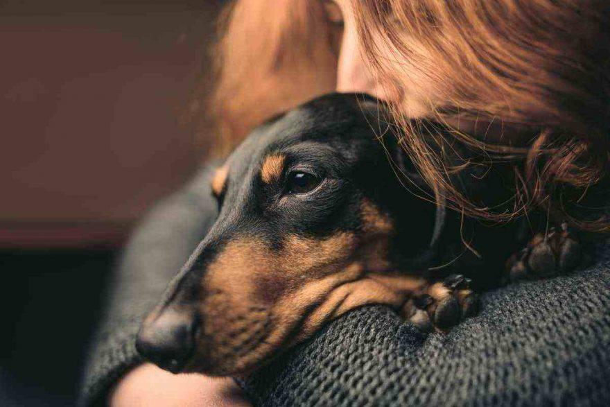 Il cane trema