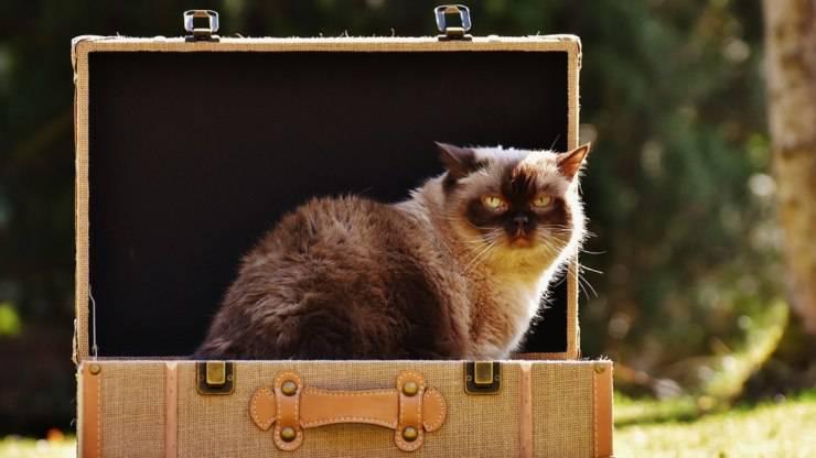 trasloco con il gatto senza stress