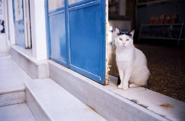 cat islands grecia