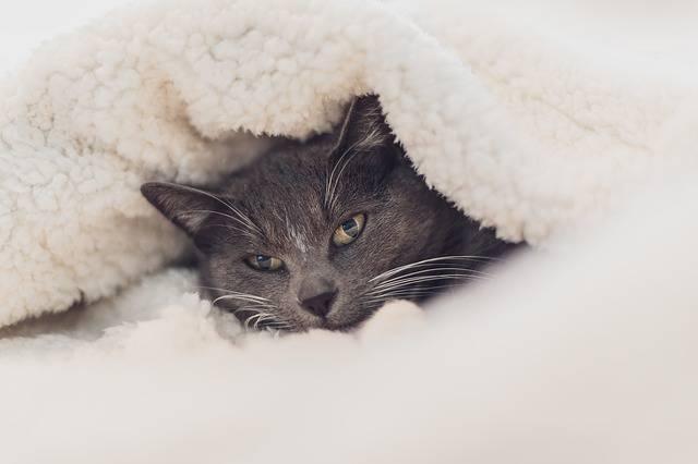 gatto si nasconde