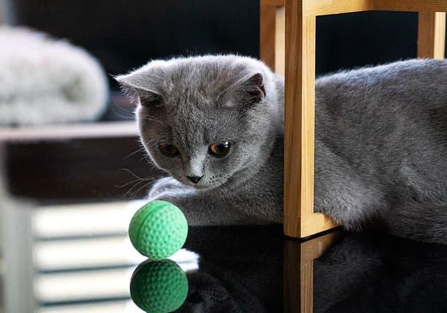 addestramento gatto
