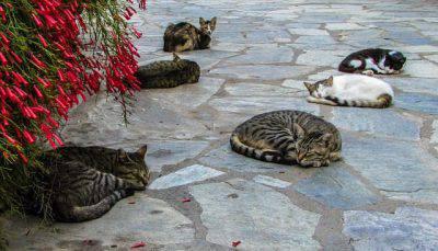 isola gatto grecia