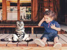 gatti adatti ai bambini