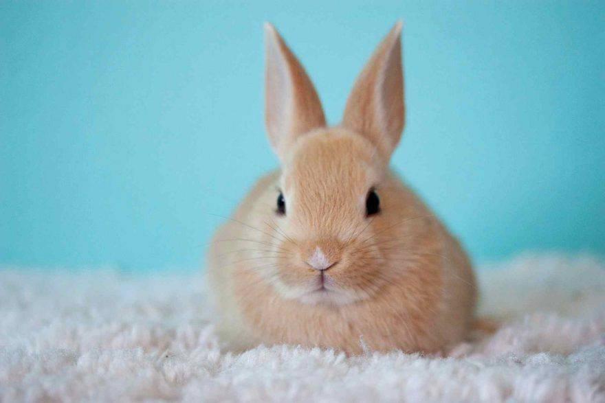 Linguaggio del corpo del coniglio