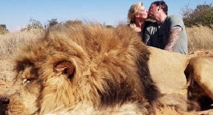 coppia caccia leone