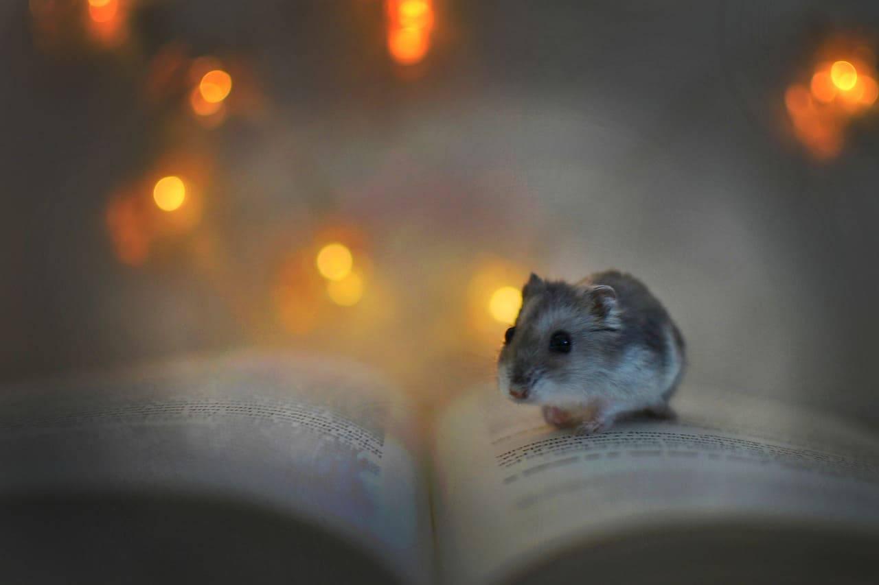 criceto libro luci