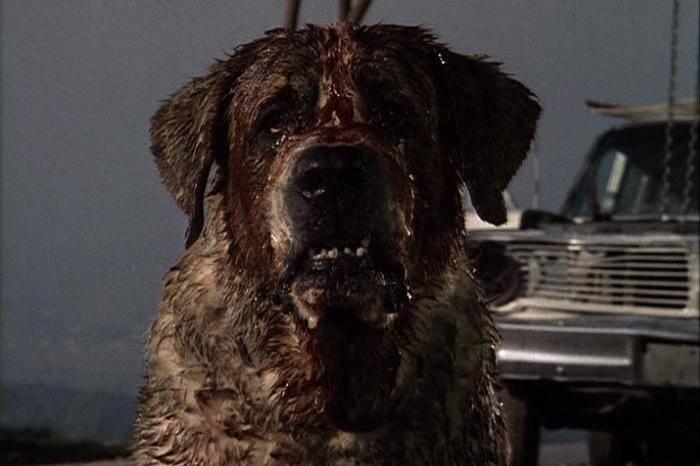 film animali assassini