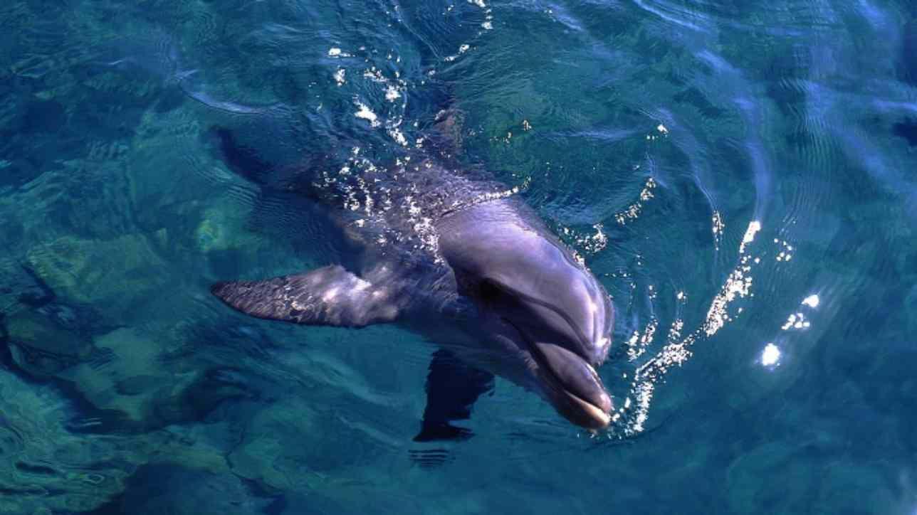 delfino ucciso