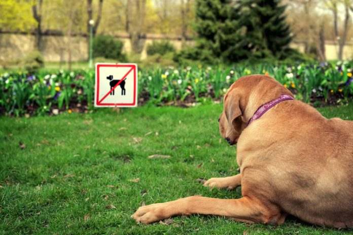 Divieto cani parchi pubblici