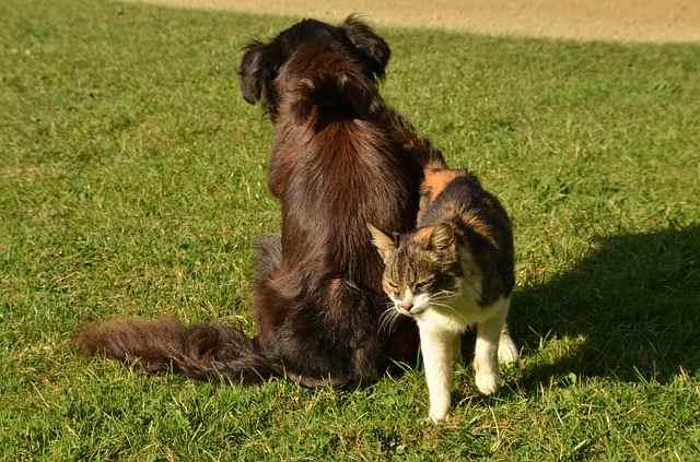 cane paura gatti