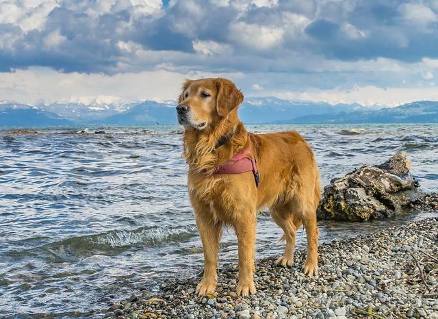 cane bagno lago