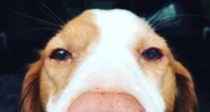 naso cane cambia colore