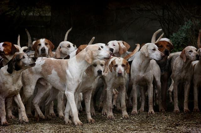 cani in gruppo