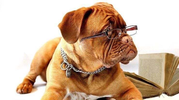 come vedono cani vista cane