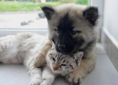 pensione cani gatti come sceglierla