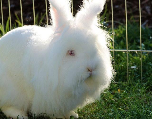 Viaggio col coniglio: tutti i consigli
