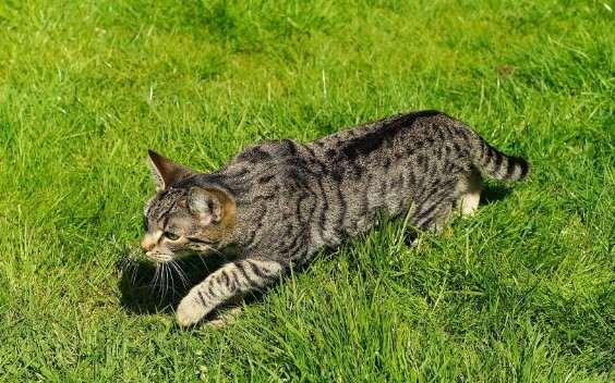 Spina dorsale gatto
