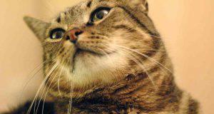 Gatto che sbava