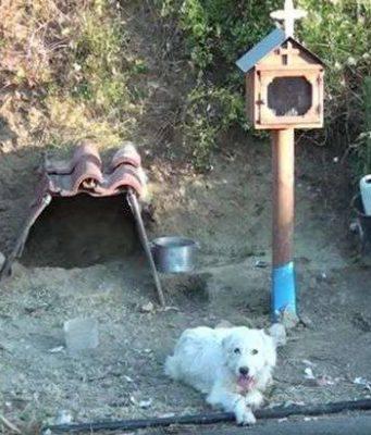 cane aspetta padrone morto