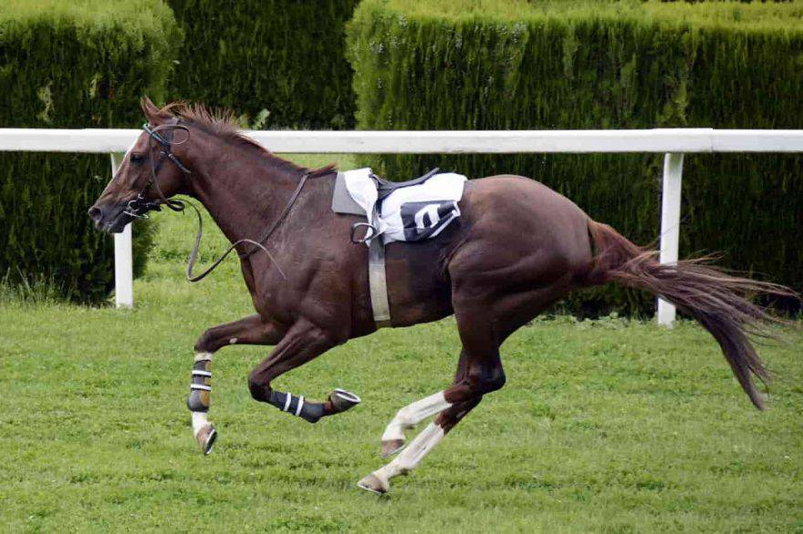cavalli ippodromo