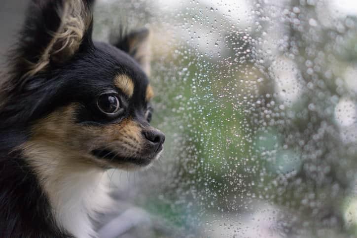 cane paura temporale pioggia