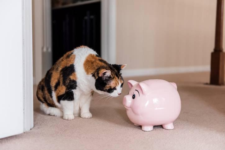 animali azienda gatto soldi